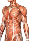 anatomy image Mat Teacher Training & Anatomy Camp